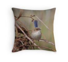 Superb Fairy-Wren ~ young male II Throw Pillow