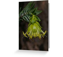 Scented Banjine Greeting Card