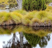 Tarn, Ronny Creek, Cradle Mountain, Tasmania, Australia. by kaysharp