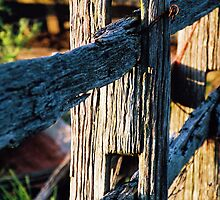 old hardwood boundary fence by Clare McClelland