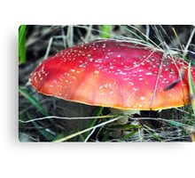 deadly toadstool Canvas Print