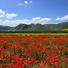 Poppies in Pian Grande by annalisa bianchetti