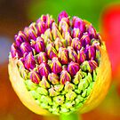 About to Bloom by SBCStudio