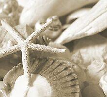 Seashells by SBCStudio