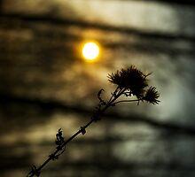 Sun by Katherine Maidle