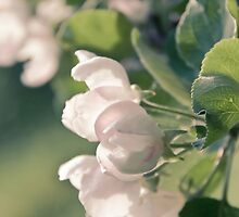 Beautiful Buds by Katherine Maidle