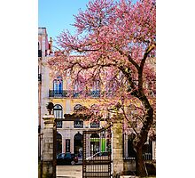 Spring in Lisbon Photographic Print