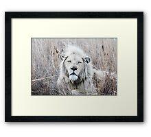 Where Lions Hide Framed Print