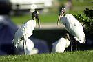 Twin Wood Storkes by Larry  Grayam