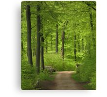 Beech wood in spring Canvas Print