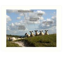 Talking Sheep Art Print