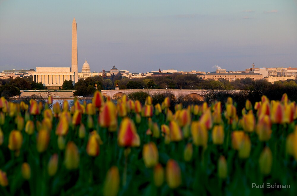 Washington DC, Arlington tulips, at Dusk by Paul Bohman