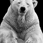 Polar Bear by rgstrachan