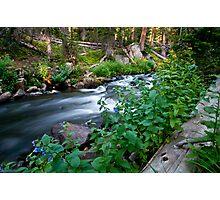 Mitchell Creek Photographic Print