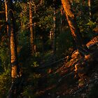 Trail Illuminated by Morning Glory, Gray Back Peak, CO 2009 by J.D. Grubb