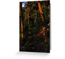 Trail Illuminated by Morning Glory, Gray Back Peak, CO 2009 Greeting Card