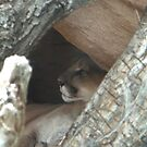 Peek-a-Boo Kitty by heathernicole00