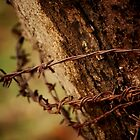 Rusty by Richard Owen