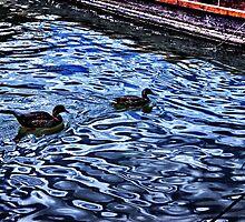 Floating Ducks Danube River by stockfineart