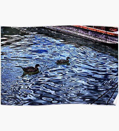 Floating Ducks Danube River Poster