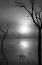 Day Break - Tenindewa Road - II by Pene Stevens
