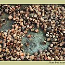 Pots by Dr. Harmeet Singh