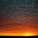 Mackerel Morning by tomcosic