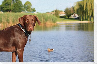 PLEEEEEEZE can I chase the duck? by Lori Deiter