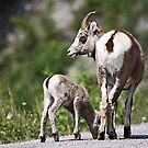 Stone Sheep Mama and Baby by Vickie Emms