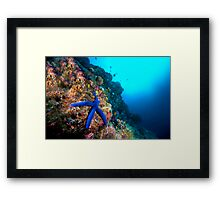 Wide Angle Starfish Framed Print