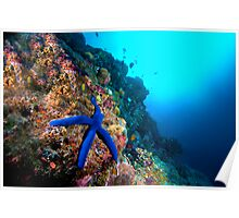 Wide Angle Starfish Poster