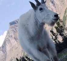 Mountain Goat by schizomania