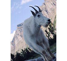 Mountain Goat Photographic Print