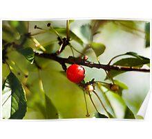 Lone Cherry Poster