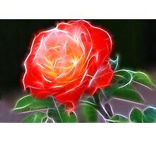 Shining Rose Photographic Print