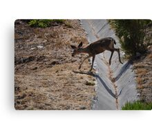 Where are you going? Canvas Print