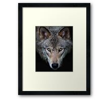 """""""All the better to see with, my child"""" Timber Wolf Framed Print"""