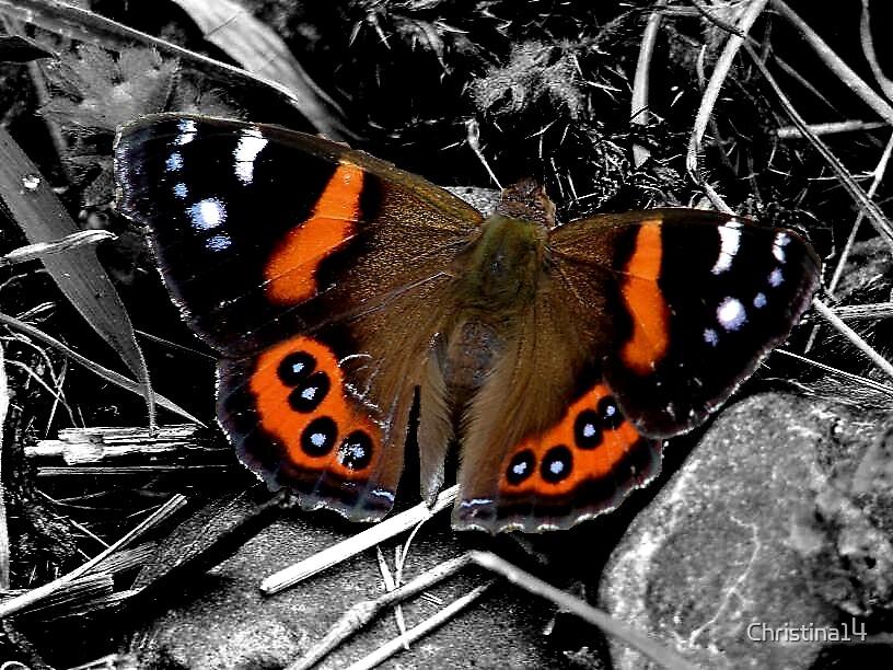 Moth? Butterfly? Beauty! by Christina14