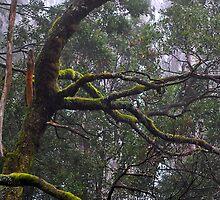 Macedon lichen by salsbells69