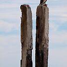 Port Willunga Jetty 1 by Topher Webb