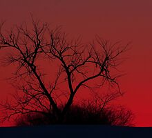 Red sky at night - Bare Tree by Jim Cumming