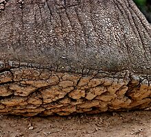 Elephant foot by Erika Gouws