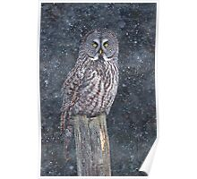 Great Grey Owl in Snow Poster