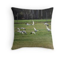 Galahs Throw Pillow