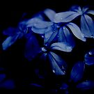 Plumbago Night by tarynb