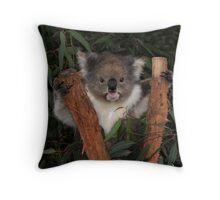 Koala - Australia's Star Performer Throw Pillow