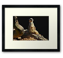 Meerkat Manor Framed Print