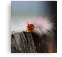 Caterpillar checkin' things out Canvas Print
