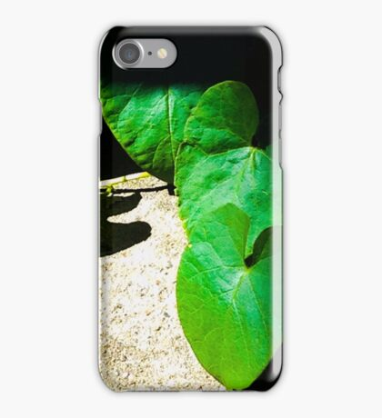Heart shaped leaves on a vine  iPhone Case/Skin