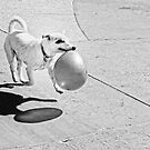 Happy Party Dog by Philip Cozzolino